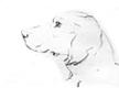 hund01